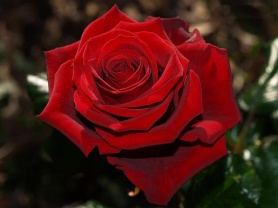 17 MAY - 06 JUNE, MYSTIC ROSE THERAPY